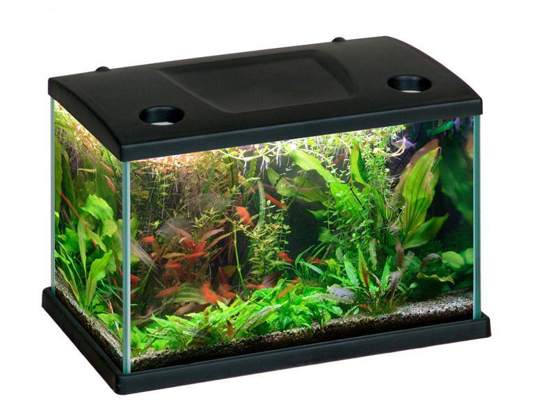 Acquario cleo acquario in vetro completo di coperchio for Acquario tartarughe completo