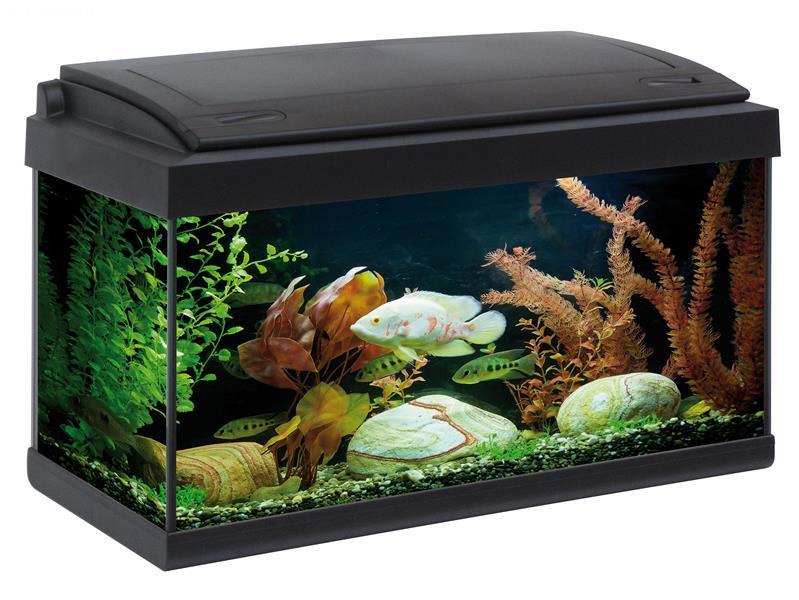 Aquarium milo 60 60x30 aquarium en verre muni d 39 un for Aquarium plastique