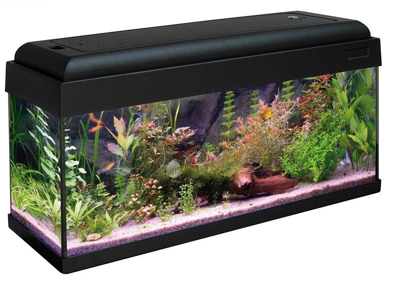 aquarium 80 x 30. Black Bedroom Furniture Sets. Home Design Ideas