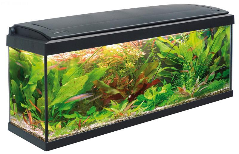 acquario milo 100 (100x30), acquario in vetro completo di