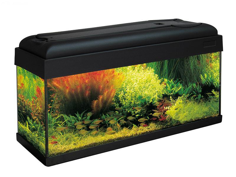 Aquarium mondolife 80 80x30 aquarium en verre muni d 39 un for Aquarium plastique
