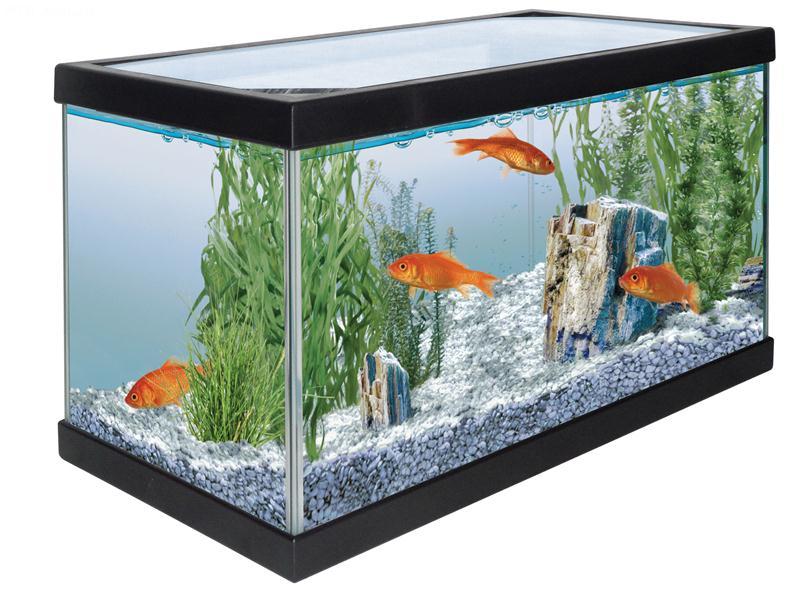 Acquario startup acquario in vetro completo di coperchio for Acquario per tartarughe con filtro