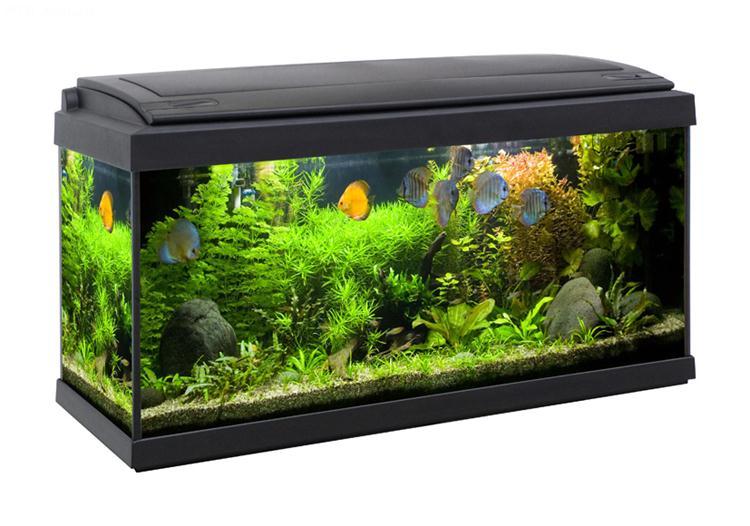 Acquario milo 80 80x30 acquario in vetro completo di for Acquario completo prezzi
