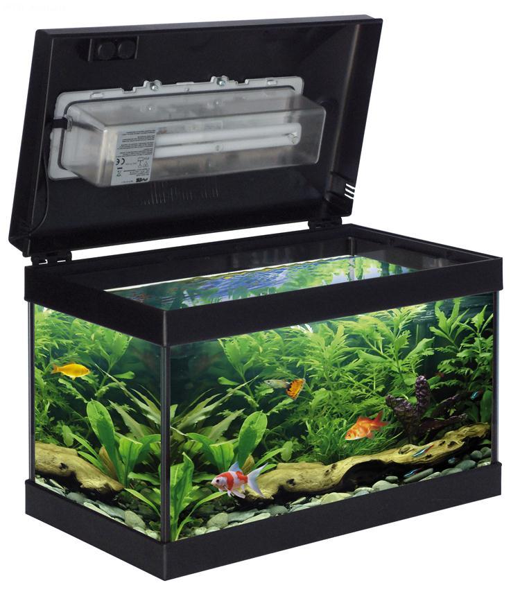 Acquario babol acquario in vetro completo di coperchio for Acquario per tartarughe piccole