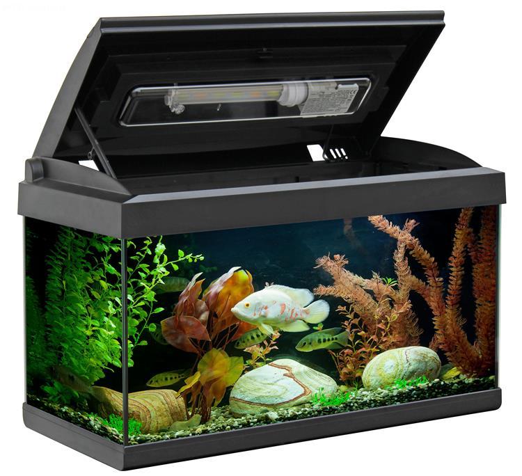 Acquario milo 60 60x30 acquario in vetro completo di for Acquario tartarughe completo