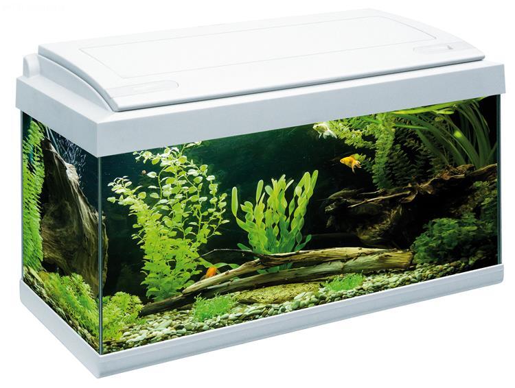 acquario milo 60 (60x30), acquario in vetro completo di coperchio