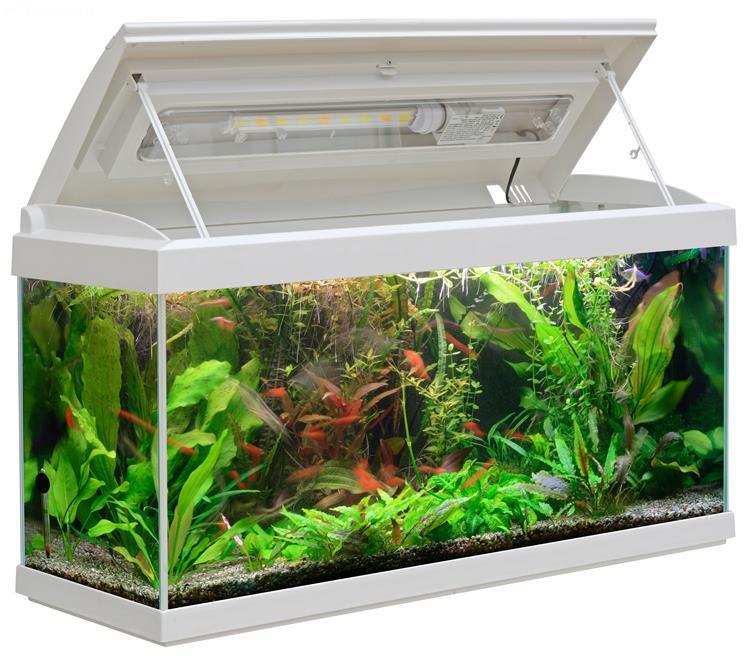 Brandneu Milo 80 Aquarium (80x30), Glass Aquarium complete with plastic  HD32
