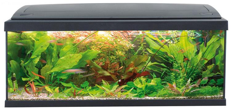 Acquario milo 100 100x30 acquario in vetro completo di for Acquario completo prezzi