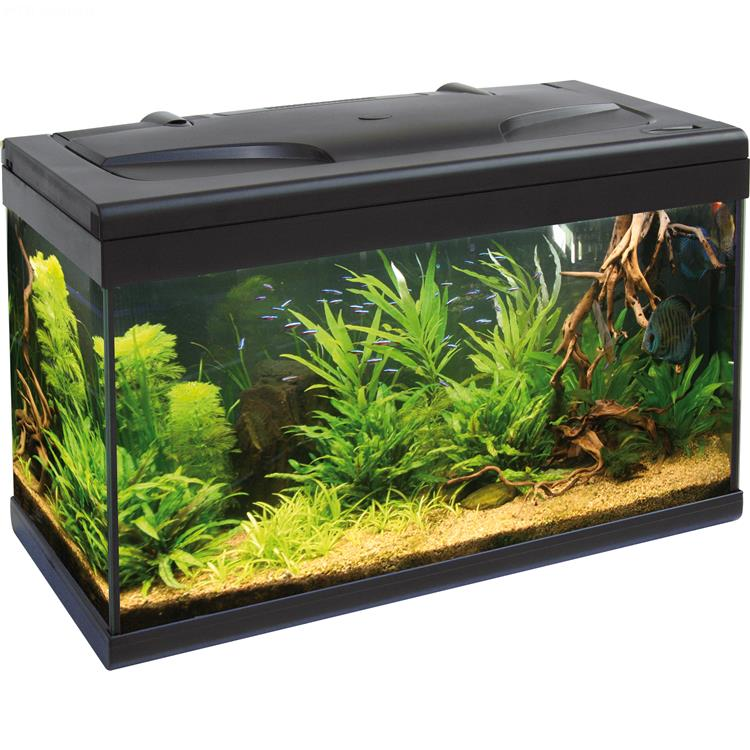 Aquarium aloha 60 60x30 aquarium en verre muni d 39 un for Acquario 300 litri prezzo