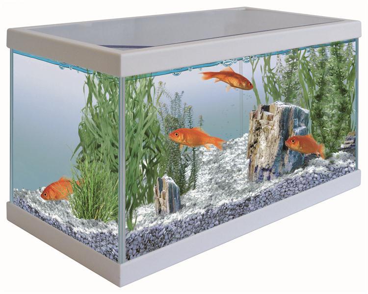 Acquario startup acquario in vetro completo di coperchio for Acquario bianco usato