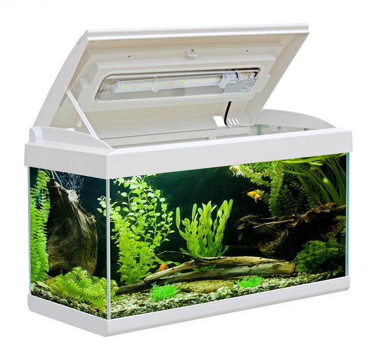 Aquarium milo 60 60x30 aquarium en verre muni d 39 un for Couvercle pour aquarium