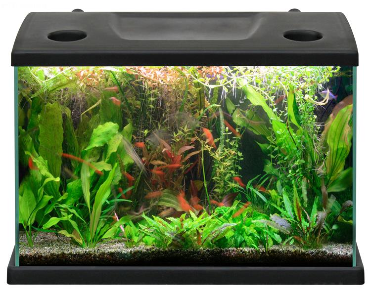Acquario cleo acquario in vetro completo di coperchio for Acquario per tartarughe piccole