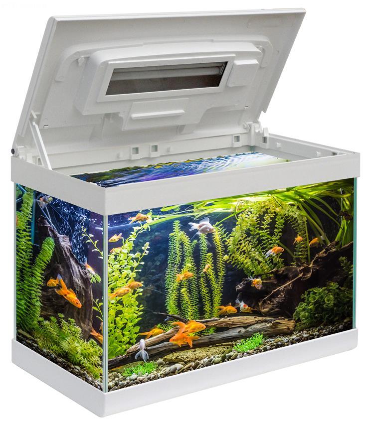 Acquario aloha 40 acquario in vetro completo di coperchio for Lampada acquario